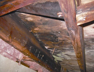 mold and rot in a La Grange crawl space